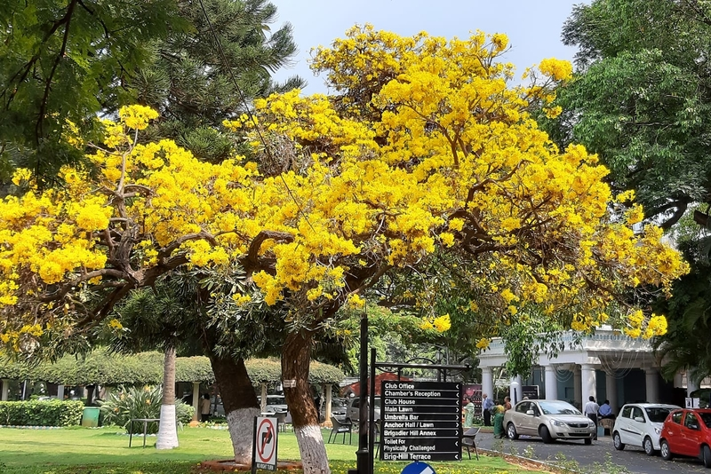 It's a burst of colour in Bangalore this spring