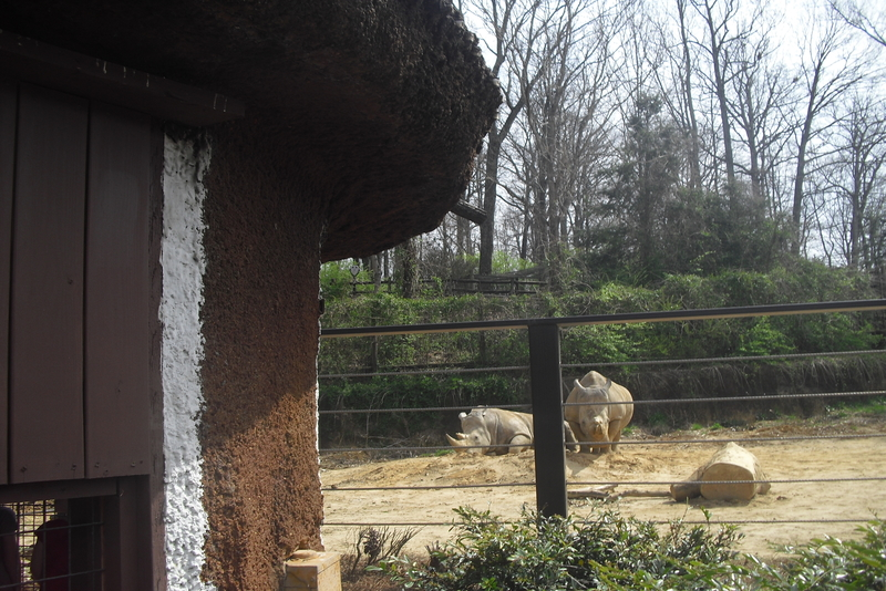 Animal encounters at the Knoxville Zoo, Tennessee